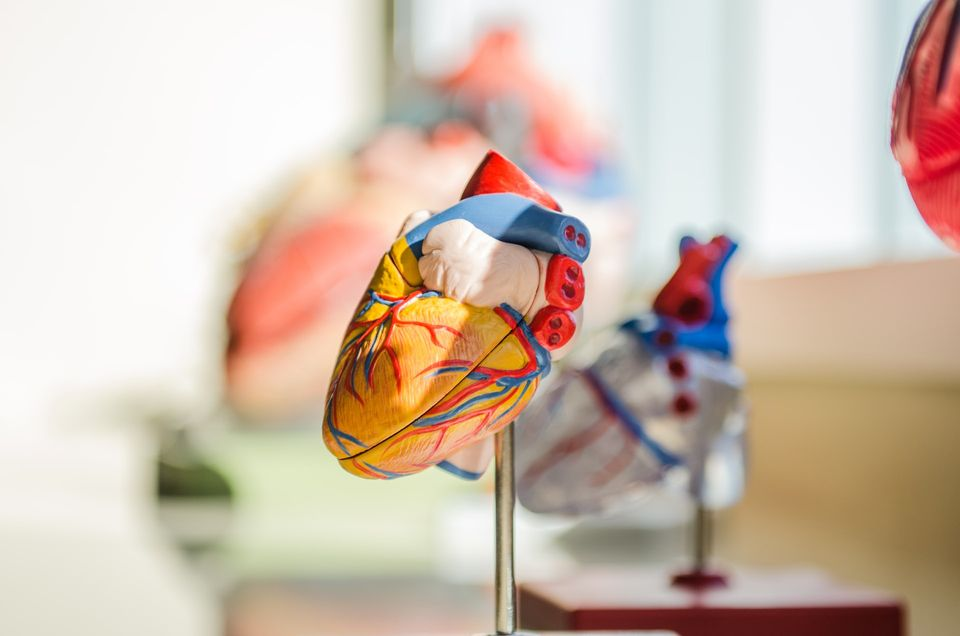 All About Cardiac Electrophysiologists in New York